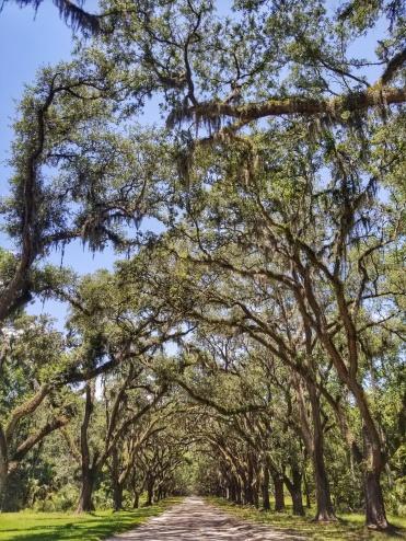 tree patheg